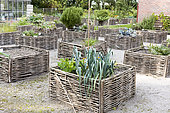 Vegetables growing in square foot gardens with hazel wood weave