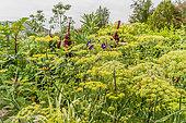 Foeniculum vulgare, Amaranthus gangeticus 'Tête d'Elephant', Ricinus communis, Ipomoea purpurea 'Grand' Pa Ott', Ecole du Breuil, Paris, France