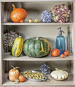 Varied squashes and dried hydrangea flowers on a shelf