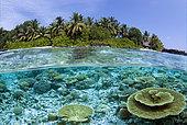 Kuramathi Island, Maldives, Indian Ocean