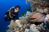 Diver and Moray in reef