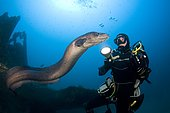 Diver and Conger Eel (Conger conger), Interaction, Wreck of Auntie, Barge at Congers, Port-Cros, France, Mediterranean Sea
