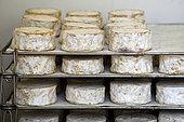Goat cheese 'Coeur de Chevre', Schott farm, Muhlbach sur Munster, Haut Rhin, Alsace, France