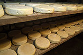 Munster AOC cheese in the cheese cellar of the farmhouse, farm Schott, Muhlbach sur Munster, Haut Rhin, Alsace, France