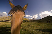 Horses grazing in the mountain, Huesca, Pyrenees, Spain