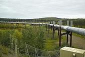Dalton Highway : from Fairbanks to Prudhoe Bay, Trans Alaska Pipeline System (TAPS), Autumn at mile 56, Yukon crossing, Alaska, USA