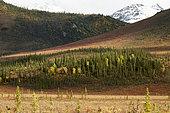 Dalton Highway : from Fairbanks to Prudhoe Bay, Autumn tundra south of the Brooks Range, Alaska, USA