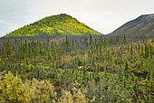 Dalton Highway : from Fairbanks to Prudhoe Bay, Taiga landscape, Alaska, USA
