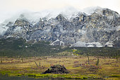 Dalton Highway : from Fairbanks to Prudhoe Bay, Mount Sukakpak (1338 m) and its pingos (frozen knolls), Alaska, USA