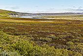 Dalton Highway : from Fairbanks to Prudhoe Bay, Autumn tundra landscape, Alaska, USA