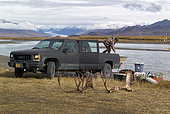 Hunting back near the Maclaren Glacier, Denali Highway: from Paxson to Cantwell, Alaska, USA