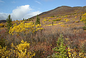 Autumn colors on Clearwater Mountains, Denali Highway: from Paxson to Cantwell, Alaska, USA