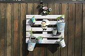 Palette servant de support à des décorations de jardin, sur une terrasse, automne, Somme, France