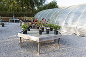 Table presenting plants in a greenhouse, autumn, Somme, France