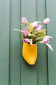Sabot fleuri avec des tulipes, dans un jardin en automne, Allemagne