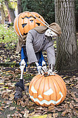 Halloween display using pumpkins and skeleton in a garden, Germany