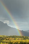 Rainbow and colors of late autumn in the park, Denali National Park, Alaska, USA