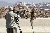 Wildlife film maker shooting Hamadryas baboons (Papio Hamadryas), Saudi Arabia