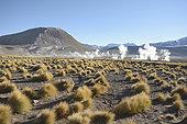 Tatio Geysers, Puna de Atacama, near San Pedro de Atacama, II Antofagasta Region, Chile