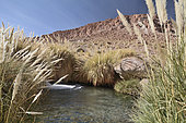 Hot Springs, Puritana Terme, Atacama Desert, San Pedro de Atacama, II Antofagasta Region, Chile