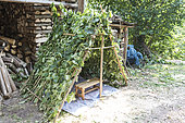 Small hut made of hazel wood, summer, Moselle, France
