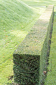 Hedge of freshly cut cypress, autumn, Somme, France