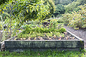Vegetables in a vegetable patch, autumn, Somme, France