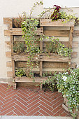 Planter on wooden pallets