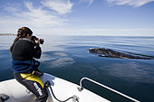 Photographer & Southern right whale (Eubalaena australis), Conservation Dependant (IUCN), UNESCO Natural World Heritage Site, Golfo Nuevo, Peninsula Valdes, Chubut, Patagonia, Argentina, Atlantic Ocean