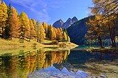 Autumnally coloured larch trees reflected in lake Lei da Palpuogna, Albula Pass, Canton of Graubünden, Switzerland, Europe
