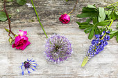 Floral assortment on a garden table, spring, Pas de Calais, France