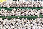 Tarn pink garlic on a market stall, summer, Provence, France
