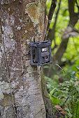 Veillance camera attached to a tree, camera trap, Kaziranga National Park, State of Assam, India