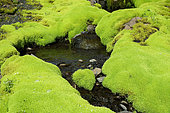 Pale Glaucus Thread moss and volcanic hills, Landmannalaugar, Iceland