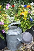 Mixed summer bouquet from garden