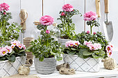 Spring flowers on pots