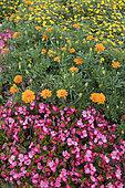 Flower bed in a garden, France, Moselle, springtime