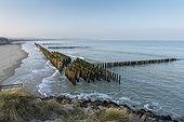 Alignements de pieux en bois plantés dans le sable afin de disperser l'énergie de la houle et favoriser le retour des sédiments,hiver, côte d'Opale, France