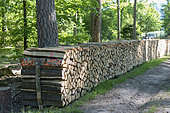 Stacks of Firewood, Beech Essence, Spring, Northern Vosges, France