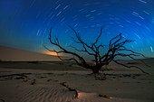 Dead Tree. Long exposute at night of desetification, Lençois Maranhenses, Brazil