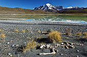 Animal bones on the edge of a lake in front of the Cuernos Massif, Torres del Pain National Park, Patagonia, Chile