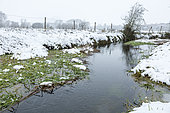 River Thame, Chearsley, Buckinghamshire
