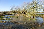 River Thame, Buckinghamshire, England
