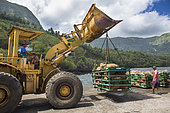 Loading the copra bags by an excavator which are shipped to Tahiti, on the Aranui 5 cruise ship, to be turned into coconut oil, Puamau, Hiva Oa Island, Marquesas Islands, French Polynesia