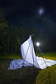 Spanish moon moth (Graellsia isabellae) catching on Insect trap at night, The Ports Natural Park, Terres de L'Ebre, Tarragona, Catalonia, Spain, Europe