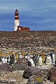 Magellanic penguin (Spheniscus magellanicus). National Park Penguin Island. Puerto Deseado, Argentina.