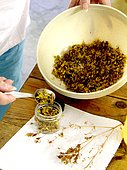 St. John's wort, processing and preparation in care oil, cosmetic, France