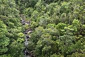 Tropical rainforest of eastern Madagascar seen from above, Andasibe, Perinet, Alaotra-Mangoro Region, Madagascar