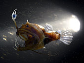 Sea devil; Linophryne maderensis. Young female. Offshore Madeira Island. Composite image. Portugal. Composite image
