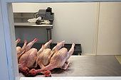 Organic chickens after slaughter, Provence, France